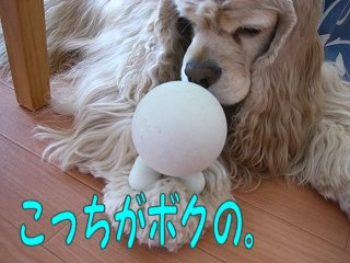 2006_05_21_060